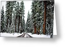 Wintry Forest Drive Greeting Card