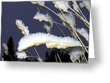 Wintry Wild Oats Greeting Card