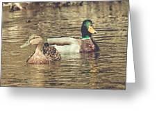 Wisconsin Ducks Greeting Card