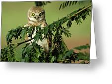 Wise Watcher Greeting Card