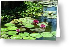 Wishes Among The Water Lilies Greeting Card