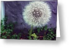 Wishful Thinking Greeting Card