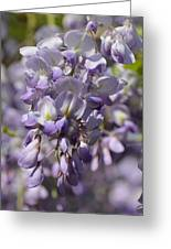 Wisteria 15-02 Greeting Card