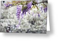Wisteria Greeting Card by Darren Fisher