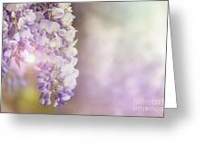 Wisteria Flowers In Sunlight Greeting Card
