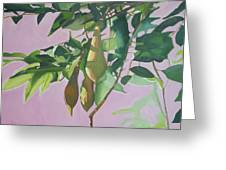 Wisteria Pod On Pink Background Greeting Card