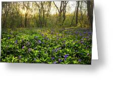 Wistow Wood Bluebells 1 Greeting Card
