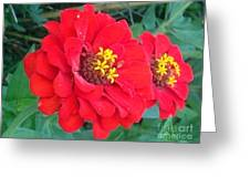 With Beauty As A Pure Red Rose Greeting Card