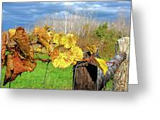 Withered Grape Vine Greeting Card