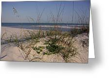Withering Dunes Greeting Card