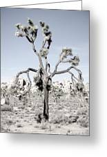 Withering Joshua Tree Greeting Card