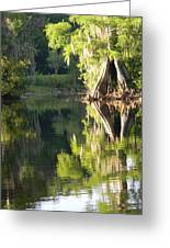 Withlacoochee Cypress Reflections Greeting Card