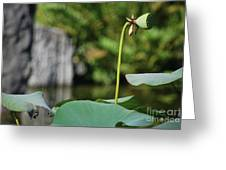 Without Protection Number Four Greeting Card