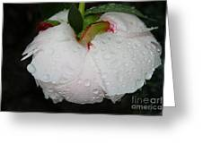 Without Umbrella Greeting Card