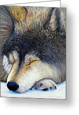 Wolf Dreams Greeting Card