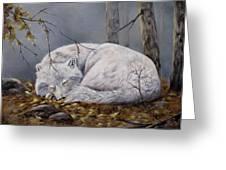 Wolf Dreams Greeting Card