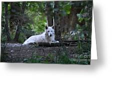 Wolf Greeting Greeting Card
