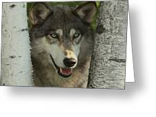 Wolf In The Birch Trees Greeting Card
