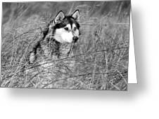 Wolf In The Grass Greeting Card by Kyle Gray
