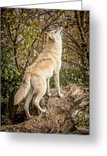 Wolf In The Woods Greeting Card