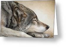 Wolf Nap Greeting Card