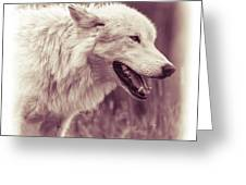Wolf Of Yellowstone National Park Greeting Card