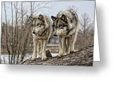 Wolf Pair Greeting Card