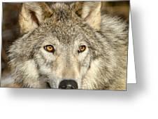Wolf Portrait Greeting Card