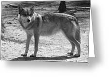 Wolf Pride Greeting Card
