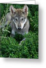 Wolf Pup Portrait Greeting Card