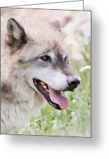 Wolf Smile Greeting Card