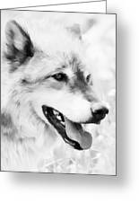 Wolf Smiling Black And White Greeting Card