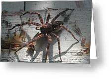 Wolf Spider Sunlight Greeting Card