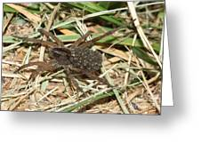 Wolf Spider With Babies Greeting Card