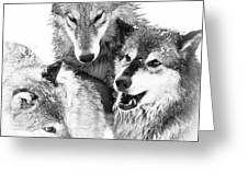 Wolf Triplets Greeting Card