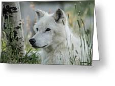 Wolf, White Greeting Card