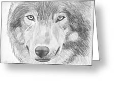 Wolf Wildlife Portrait Original Sketch By Pigatopia Greeting Card
