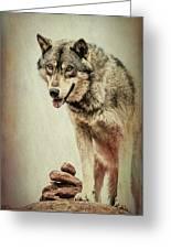 Wolf Wonder Greeting Card