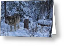 Wolf Wonderland Greeting Card