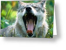Wolf Yawn Greeting Card