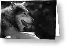 Wolfie Greeting Card