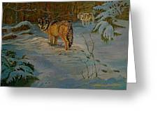Wolves Of Maine Greeting Card