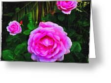 Wonder Of Nature Greeting Card