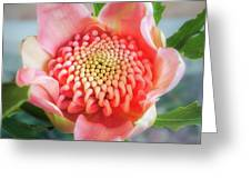 Wonderful Bright Pink Waratah Bud Greeting Card