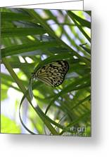 Wonderful Look At A Tree Nymph Butterfly In Foliage Greeting Card