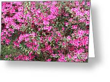 Wonderful Pink Azaleas Greeting Card
