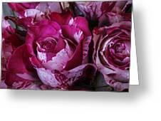Wonderful Pink Red Rose Greeting Card