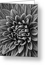 Wonderful Tones Dramantic Dahlia Greeting Card