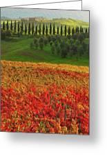 Wonderful Tuscany, Italy - 07  Greeting Card