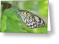 Wonderful Up Close Look At A Large Tree Nymph Butterfly Greeting Card